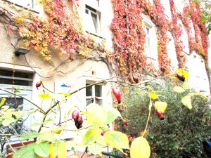 Autumn at the hostel